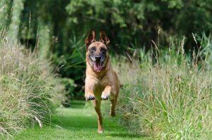 Když u vás zahradničí pes aneb jak svou zahradu ochránit?