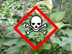 Rizika kolem nás. Jedovaté rostliny doma i v zahradě